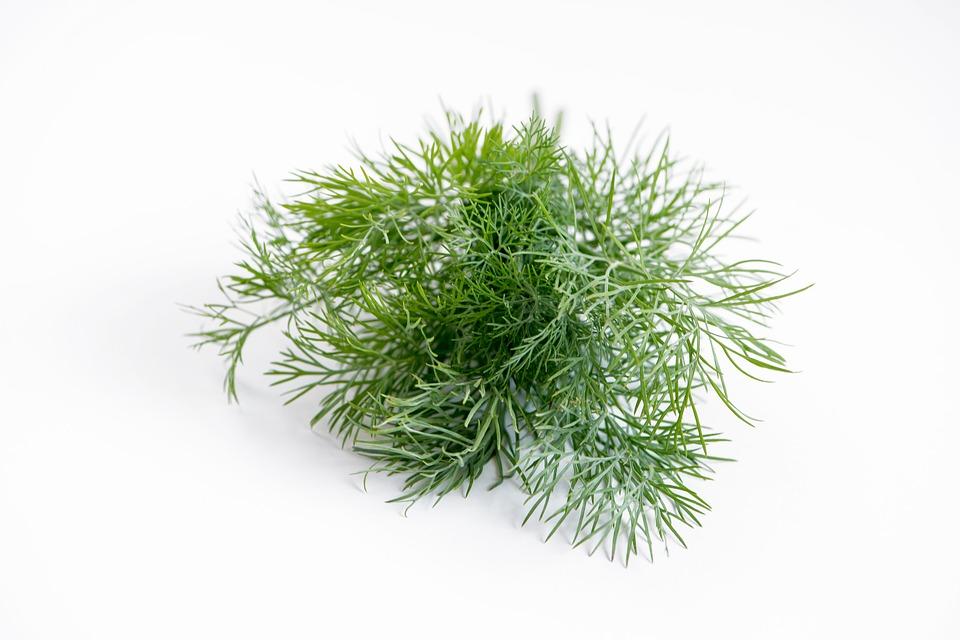 Herbs Healthy